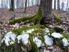 Neu_gruener-Karst