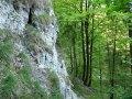 Gruener-Karst