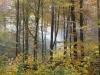 Herbstlicher Karstbuchenwald