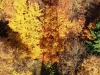 Schatten-Poppenbergturm-auf-Baum---Christian-Schelauske-(1)